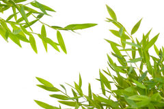 листья ветви Стоковые Изображения