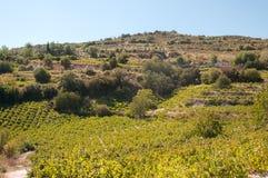 Листья виноградины. Стоковое Изображение RF