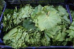 Листья виноградины коробки Стоковое фото RF