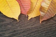 Листья вишни осени на деревянной предпосылке Стоковые Фотографии RF