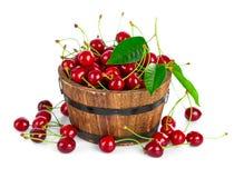листья вишни ягод свежие зеленые Стоковые Изображения RF