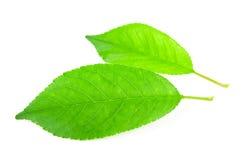 Листья вишни стоковые фотографии rf