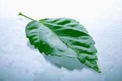 листья влажные Стоковые Фотографии RF