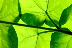 листья вниз стоковая фотография