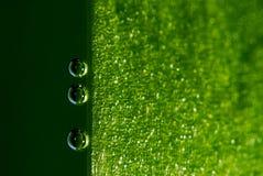 листья воздушных пузырей Стоковое Изображение
