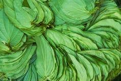 листья вороха Стоковые Фотографии RF