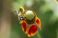 листья вырезывания пчелы Стоковое Фото