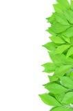 Листья выровняны совместно красиво Стоковые Изображения RF