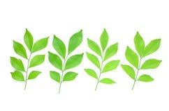Листья выровняны совместно красиво Стоковые Фото