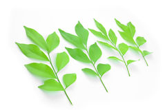 Листья выровняны совместно красиво Стоковые Фотографии RF