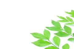 Листья выровняны совместно красиво Стоковое фото RF