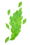 Листья выровняны совместно красиво Стоковые Изображения