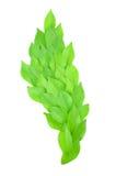 Листья выровняны совместно красиво Стоковая Фотография RF