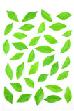 Листья выровняны совместно красиво Стоковое Изображение