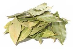 листья высушенные заливом Стоковое Изображение