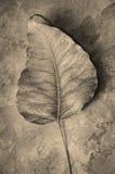 листья высушенные конспектом Стоковое Изображение