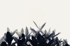 Листья в ветре Стоковые Изображения