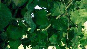 Листья в ветре видеоматериал