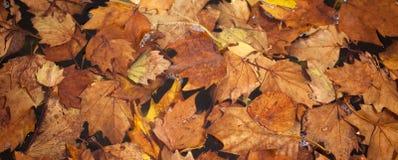 Листья в воде Стоковая Фотография RF