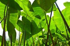 Листья в влажных лесах. Стоковые Фотографии RF