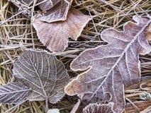 Листья в декабре сухие упаденные лиственные предусматриванные с заморозком стоковая фотография rf