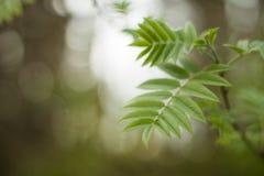 Листья в лесе стоковое изображение rf