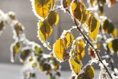 Листья в заморозке стоковая фотография rf