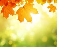 Листья в лесе осени стоковое изображение rf