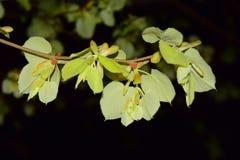Листья в ноче Стоковое Изображение