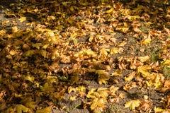 Листья в октябре Стоковое Изображение RF