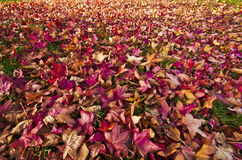 Листья в осени падения Стоковая Фотография