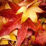 Листья в осени Стоковое Фото