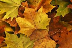 Листья в осени Стоковая Фотография RF