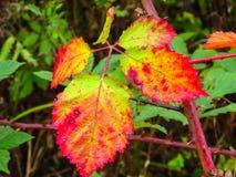 Листья в осени Стоковое фото RF