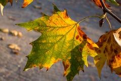 Листья в осени Стоковая Фотография