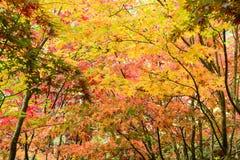 Листья в осени стоковое изображение