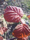 Листья в падении стоковое изображение rf