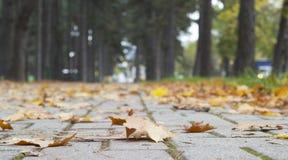 Листья в парке Стоковое фото RF