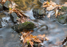 Листья в потоке Стоковые Изображения