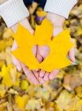 Листья в руках стоковая фотография