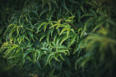 Листья в саде Стоковые Фото