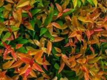 Листья в сезоне дождей Стоковые Изображения