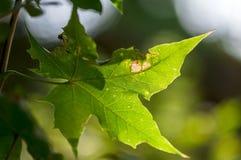 Листья в Солнце Стоковое Изображение RF