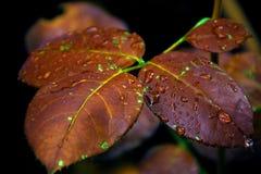 Листья в цветах осени стоковое фото