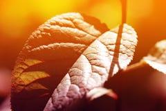 Листья в backlight, отмелом фокусе Стоковые Изображения