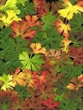 листья гераниума предпосылки Стоковое Фото