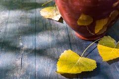 Листья глиняного кувшина и желтого цвета натюрморта осени Стоковое Изображение