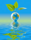 листья глобуса Стоковая Фотография