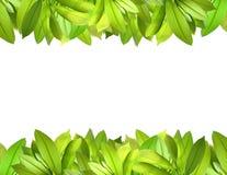 листья граници свежие естественные Стоковое фото RF