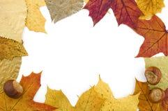 листья граници Стоковое Изображение